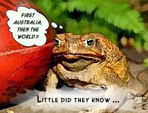 Cane Toad Dreams