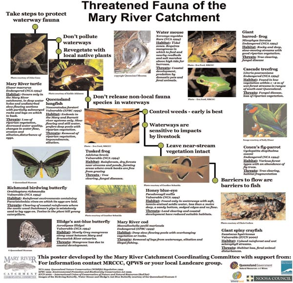 Endangered Marry River catchment species