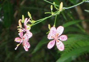Orchids in the rain