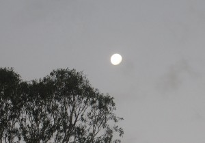 Moonrise over Flooded Gums