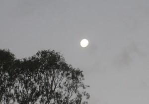 Moonrise over Flooded Gums