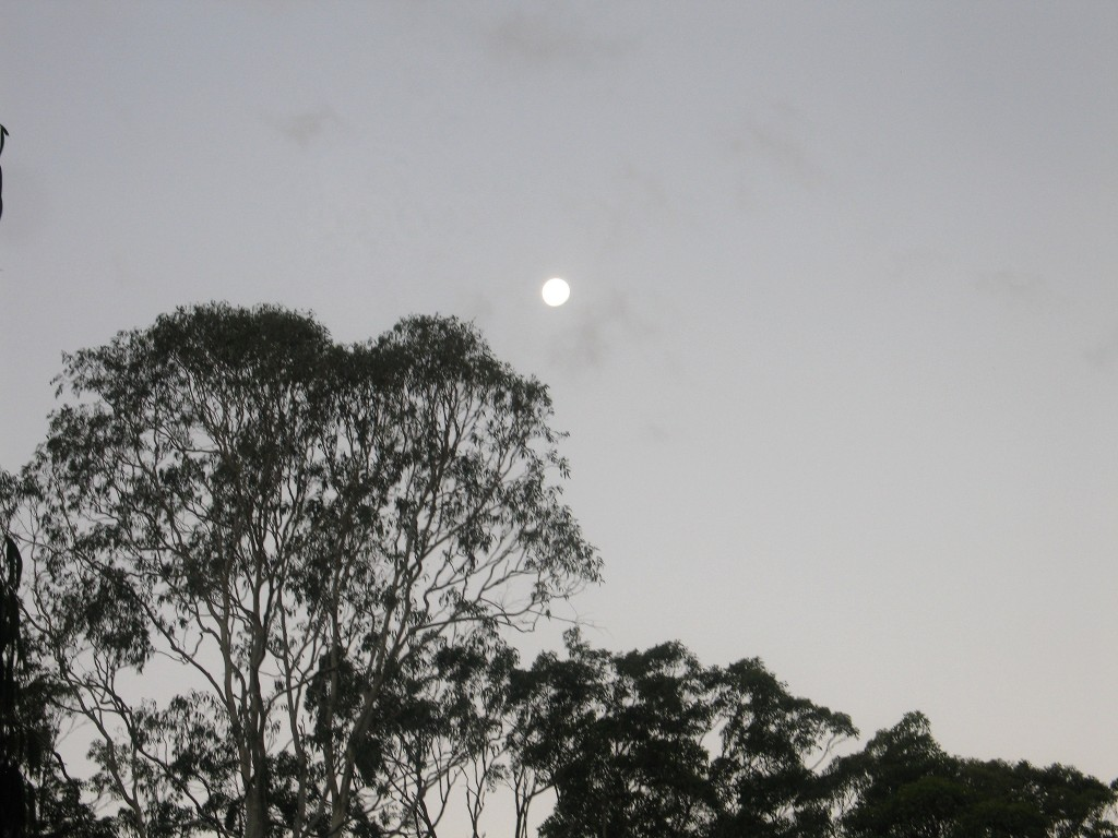 Moonrise at Twilight with Eucalypts