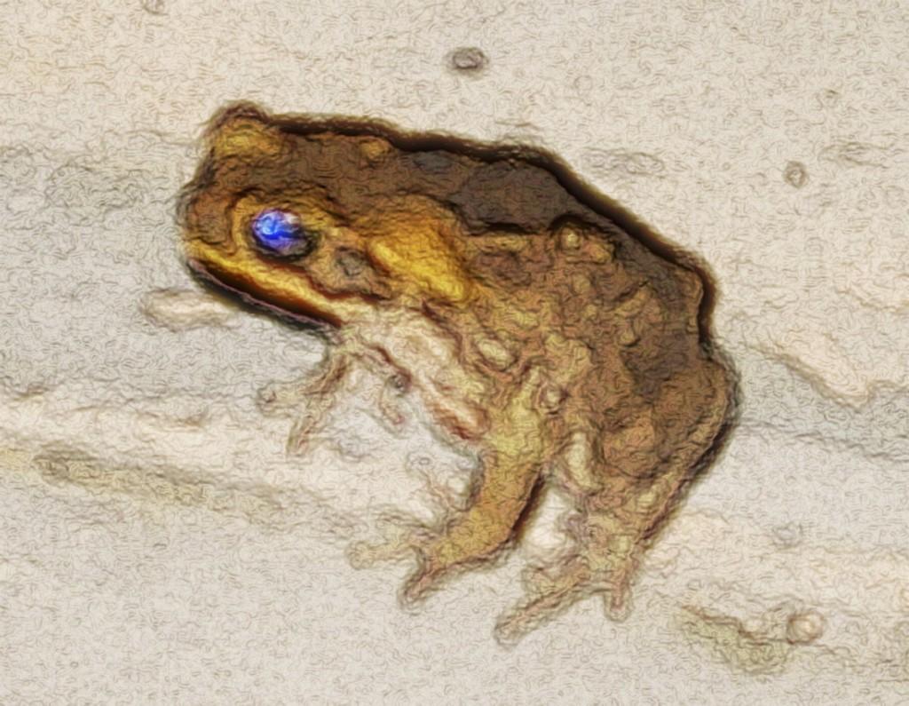 Toadscape