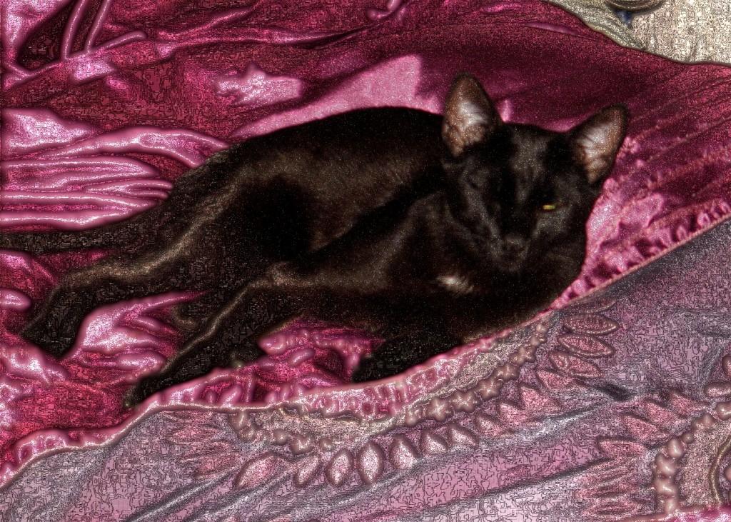 This black cat