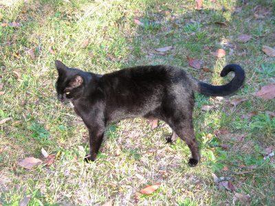 Disdainful Black Cat